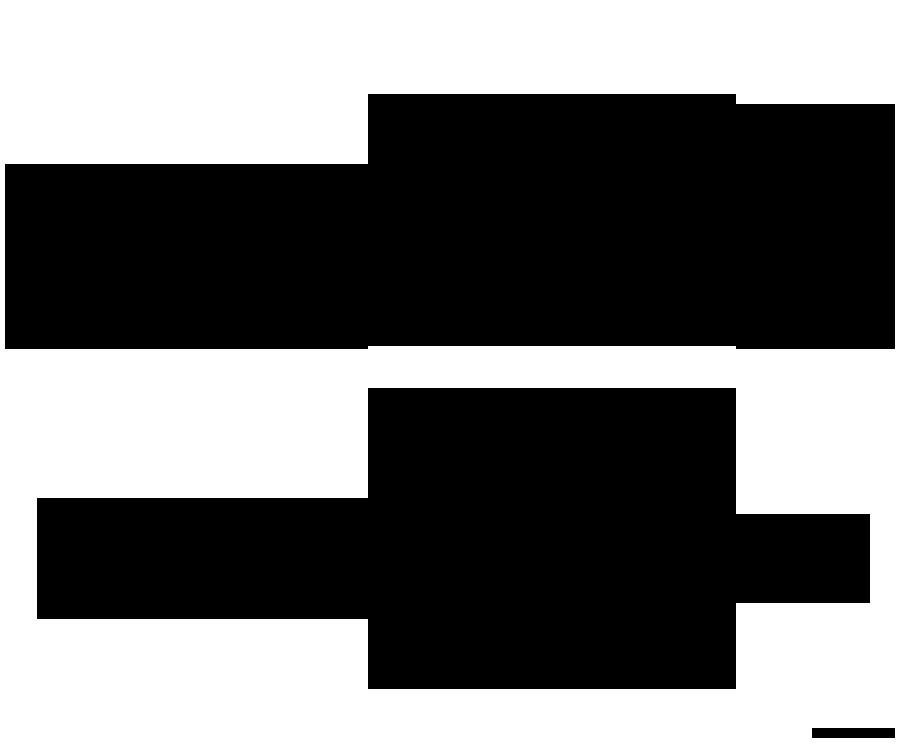 MA K1050 FT